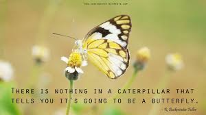 Butterfly Quotes Best Butterfly Quotes New Gen Entertainments
