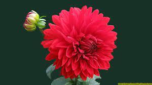 Beautiful Whatsapp DP Images HD Flowers ...