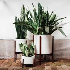 poisonous houseplants 10 indoor plants for pet owners and pas to avoid