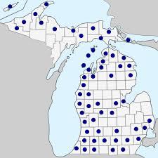 Rumex obtusifolius - Michigan Flora
