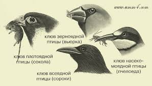 Птицы Доклад о птицах Развитие детей Онлайн игры Сказки  птицы доклад о птицах для детей птицы доклад для детей фото птиц