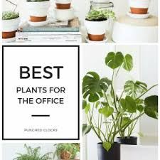 great office plants. Exquisite 12 Best Plants For The Office - Punched Clocks Throughout Cozy Impressions Great
