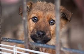 Schronisko dla bezdomnych zwierząt z terenu gminy Wieliczki | Witryna Gminy Wieliczki