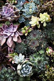 Beautiful color and texture - succulents