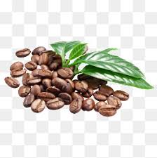 coffee beans png. Perfect Png Coffee Coffee Beans Page PNG Image And Clipart Intended Beans Png Pngtree