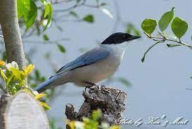 ギーギー 鳴く 鳥