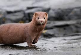 burlington goes fur free