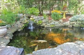 water garden or koi pond