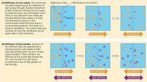 Active Vs Passive Transport Venn Diagram Rozaini Othman Guru Cemerlang Biologi Passive Transport