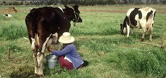 Животноводство ФАО Продовольственная и сельскохозяйственная  Тип и значение видов животных которые используются в животноводстве зависят от региона и от категории заводчиков Все эти различные виды играют важную