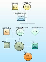 Dog Genealogy Chart Boxer Dog Wikiwand