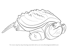 Small Picture Learn How to Draw an Alligator Snapping Turtle Reptiles Step by