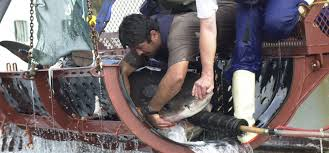 shark jobs dream jobs that can get you working sharks  ryan johnson i have been involved in shark research conservation television and ecotourism for the best part of 15 years