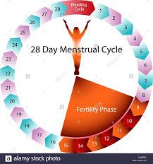 Menstrual Cycle Fertility Chart Stock Vector Art