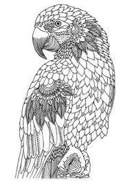 Small Picture Bird printable adult coloring page Adult ColouringOwls