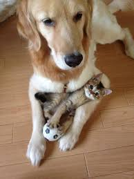 cats and dogs playing. Exellent And 8 He Is My Play Buddy Best Mate Bodyguard And Also Pillow For Cats Dogs Playing