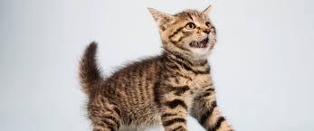 """Résultat de recherche d'images pour """"CAT"""""""