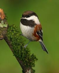 40 Best Nw Birds Images On Pinterest  Pacific Northwest Backyard Backyard Birds Pacific Northwest