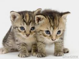 how safe is catnip for kittens with pictures