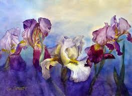 irises watercolor painting by joe cartwright white and dark flowers