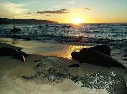 Sunset At Laniakea Beach North Shore Of Oahu Hawaii