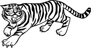 Small Picture Angry Tiger Coloring Pages Wecoloringpage