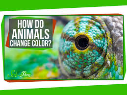 How Do Animals Change Color Youtube
