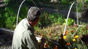 bird netting for garden. Interesting Garden Hoop Frame For Bird Netting Intended For Garden N