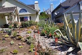 lawn replaced with new succulent garden our installation and design incorporated a new sweeping dry creek bed and tied in with the existing agave