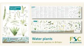 Herb Plant Identification Chart Fsc Fold Out Id Chart Water Plants Identification Chart