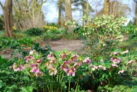 Small Picture Beth Chattos Woodland Garden