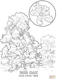 Small Picture Iowa State Tree coloring page Free Printable Coloring Pages