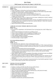 Manager Senior Resume Samples Velvet Jobs
