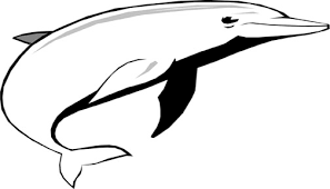 Small Picture Dolphin Coloring Pages To Print Out Coloring Pages Print Out For