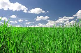 grass and sky backgrounds. Green Field And Blue Sky Background Of Cloudy Grass, Stock Photo Grass Backgrounds N