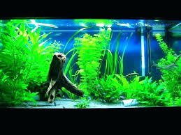 fish tank ideas no cool aquarium