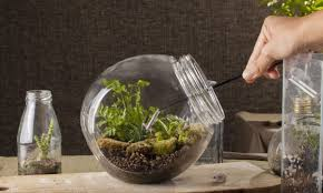 how to make your own terrarium. Interesting How 7 Steps To Making Your Own Terrarium Intended How To Make Your Own Terrarium I