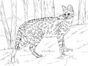 Small Picture African animals coloring pages Free Printable Pictures