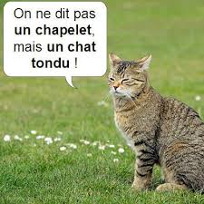 Humour Spirituel (ou presque) - Page 27 Images?q=tbn:ANd9GcQXVkva8ECgAf3ns_algN8AApJPTD6d7UIid02TMbvjwbNAOMxX