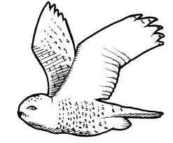 Small Picture Snowy Owl coloring page Animals Town Free Snowy Owl color sheet
