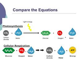 the word equation for photosynthesis and cellular respiration compare