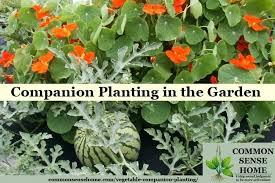Companion Planting Chart Uk Vegetable Companion Planting Batuakik Info