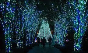 Botanical Gardens Nights Of Lights Ga Christmas Lights At The Garden Lights Holiday Nights