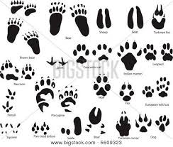 Collection Of Dog Paw Prints Drawing Download More Than
