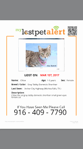 Missing Cat Poster Template Lost Pet Flyer Template Fresh Pink Brown Missing Pet Poster Maker