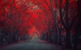 Red Trees In Autumn - 1920x1200 ...