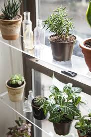 i am constantly ing new potted plants and succulents to display around my house so much so that i am pretty sure the inside will soon