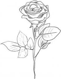 Small Picture Drawn rose long stem rose Pencil and in color drawn rose long