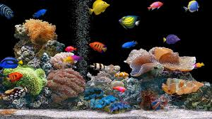 Fish Live Wallpaper For Pc Free Download