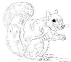Small Picture How to draw an Eastern Gray Squirrel Step by step Drawing tutorials